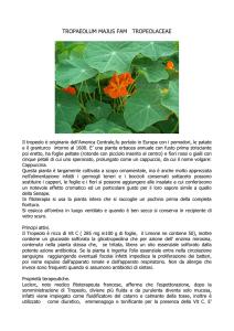 Alpi Rose Garofani Rhododendron succinico 30-40cm