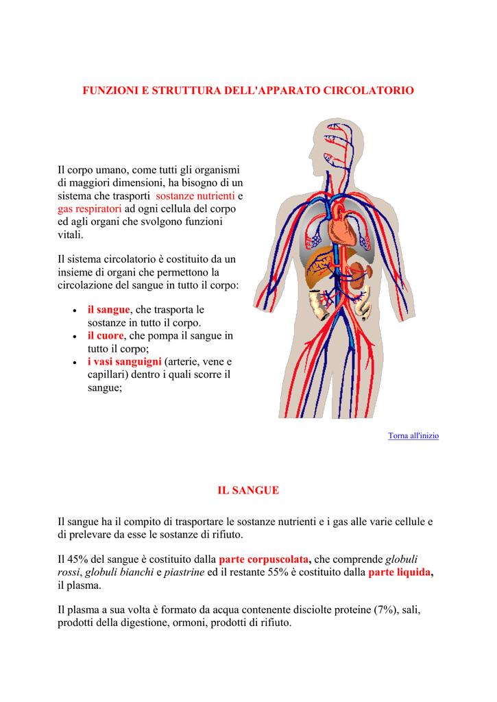 Schön Venen Im Bein Anatomie Galerie - Anatomie Ideen - finotti.info
