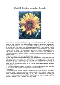 Girasole - di Carolina Bosco