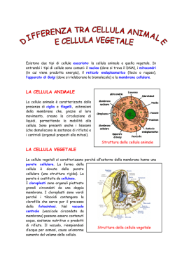 Differenza cellula animale cellula vegetale
