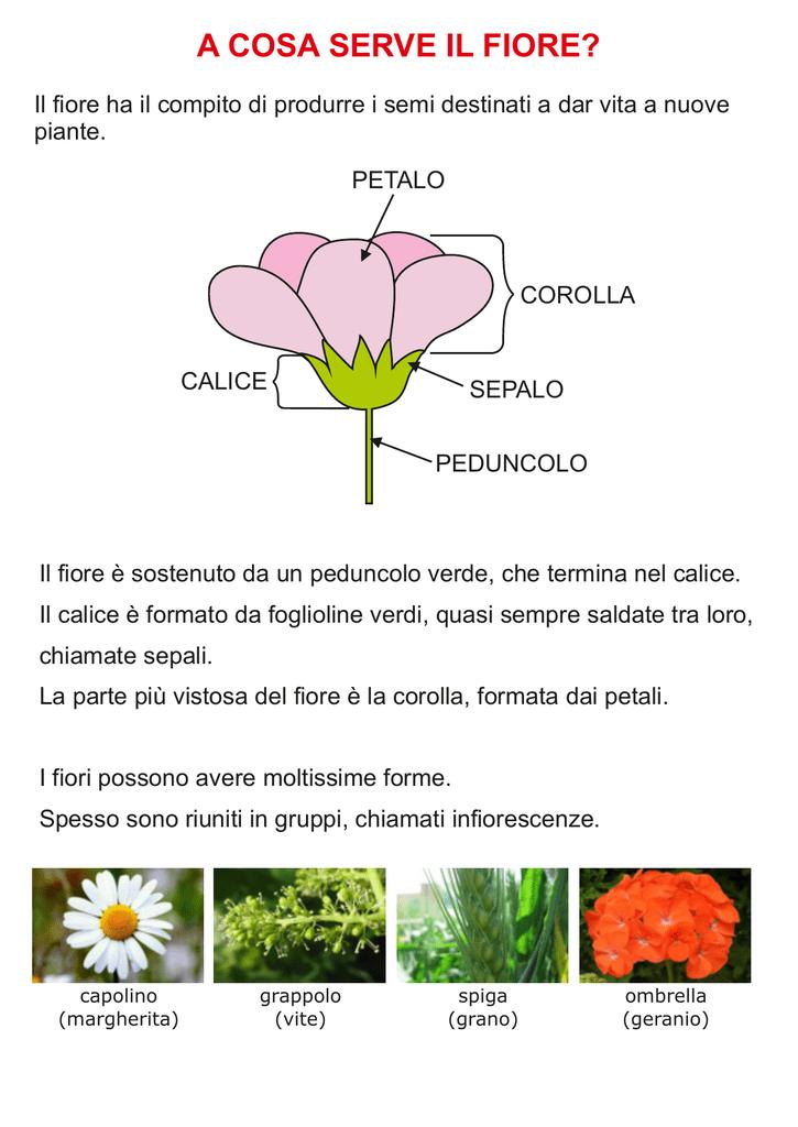 Fiori Giallo Verdognoli A Grappolo.Il Fiore Digiscuola