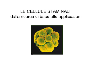 Cellule staminali embrionali 09