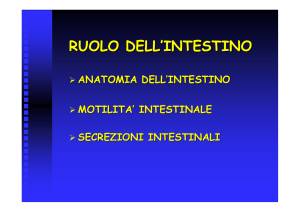 RUOLO DELL`INTESTINO