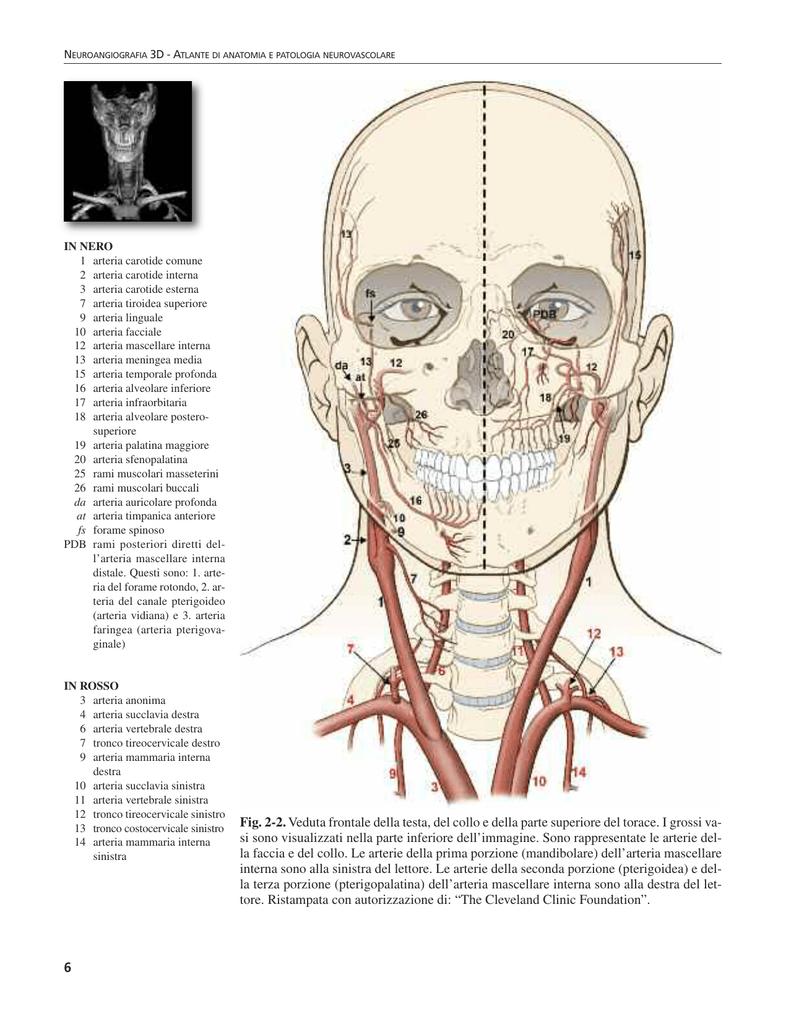 Nett Skleralsporn Anatomie Zeitgenössisch - Anatomie Ideen - finotti ...
