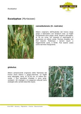 Botanica a p antoninu rubattu for Pirus pianta