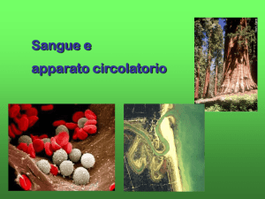 Sangue e apparato circolatorio