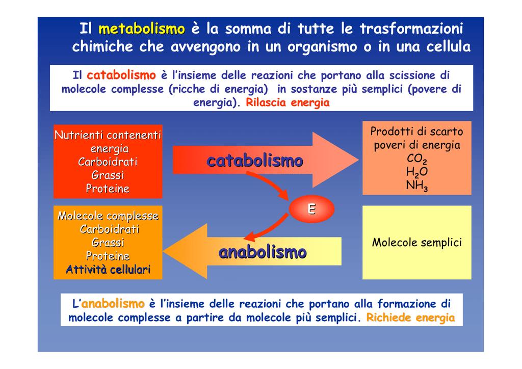 catabolismo anabolismo - e