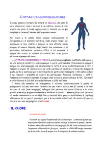 6. L`apparato circolatorio