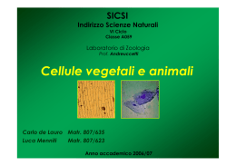 Cellule vegetali e animali