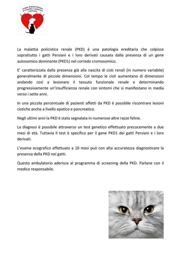 La Malattia Policistica Renale Ambulatorio Veterinario Laurentino