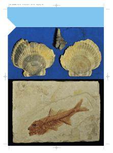 assoluto vs datazione relativa di fossili