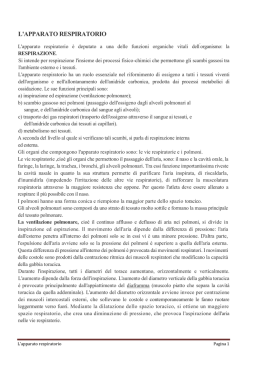 Apparato respiratorio - IT AER. Ferrarin.gov.it
