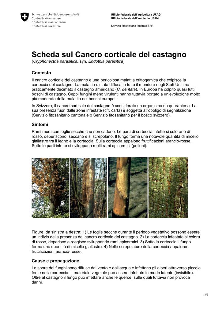 Scheda Sul Cancro Corticale Del Castagno Pdf 290 Kb 30 03 2015
