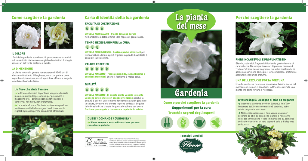 Fiori Gialli Gardenia.Scarica La Scheda Tecnica