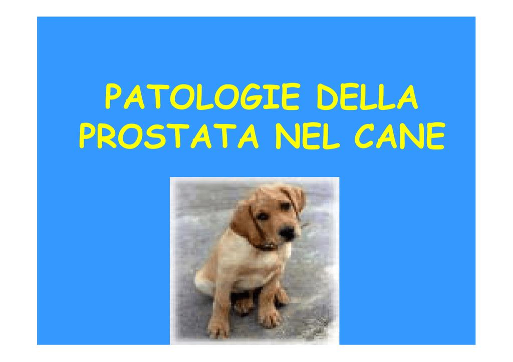 prostata calcificazioni parenchimali