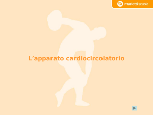 L`apparato cardiocircolatorio