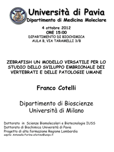 Diapositiva 1 - Dottorato in SCIENZE BIOMEDICHE