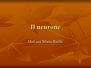 Il neurone