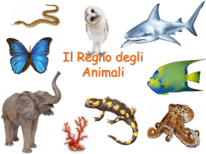 regno animale Invertebrati
