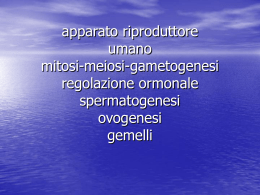 gametogenesi