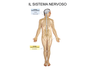 Neuroanatomia 1 File