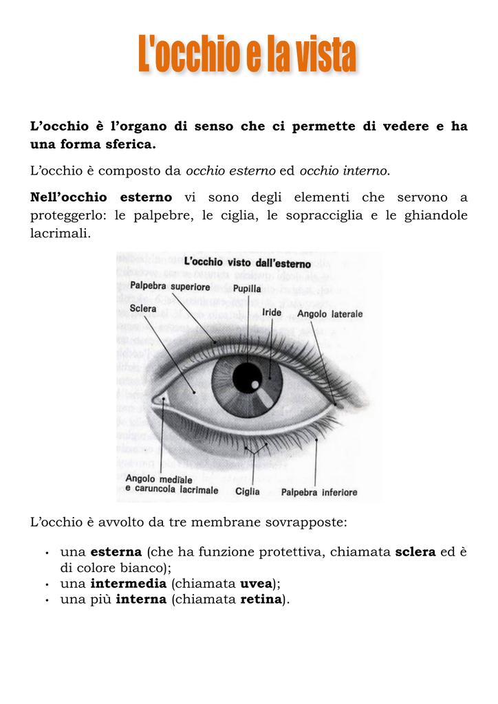 L'occhio E La Vista - Appunti di Scienze - Biologia gratis ...