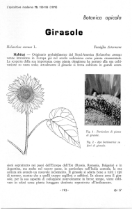 Girasole - WordPress.com