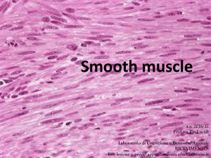 3-smooth muscle - Progetto e