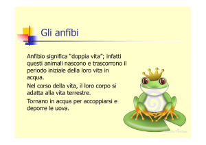 Gli anfibi - WordPress.com