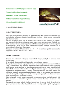 Nome comune: CARPA (Inglese: common carp)