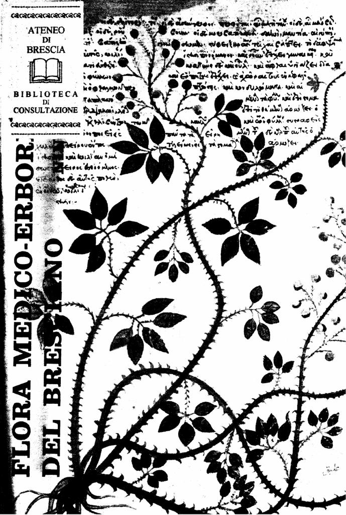 """10 x estratto di angustifolia /""""Alba NANA/' lavanda € 2,59 PRO ST"""