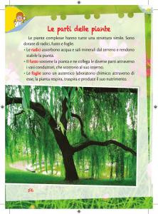 """sottile-verticale è cresciuto Prunus hillieri /""""spire/"""" ornamentali ciliegio"""