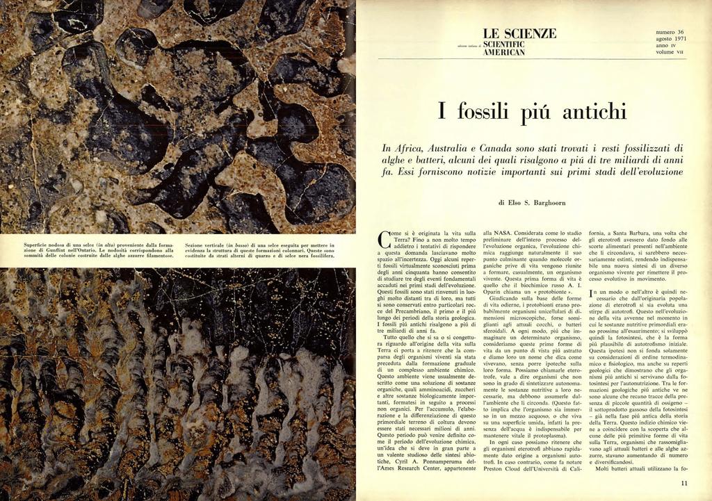 Qual è lisotopo radioattivo usato nei fossili datati