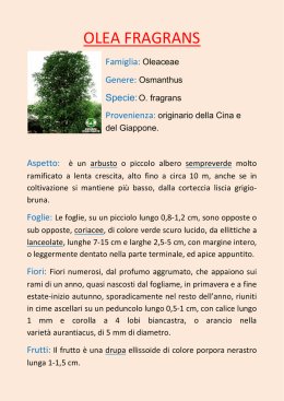 Index Seminum A.Di.PA 52342dd96aa