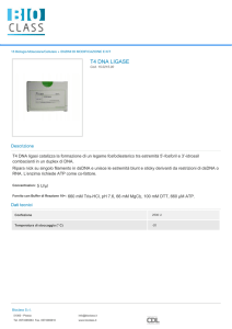 t4 dna ligase - Bioclass Srl