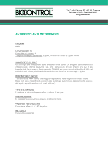anti mitocondri