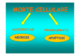 (Microsoft PowerPoint - MORTE CELLULARE 1 [modalit\340