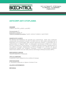 ANTICORPI ANTI CITOPLASMA