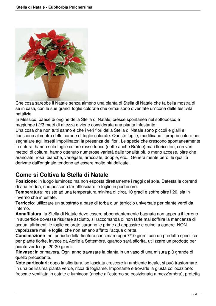 Stella Di Natale In Casa.Stella Di Natale Euphorbia Pulcherrima