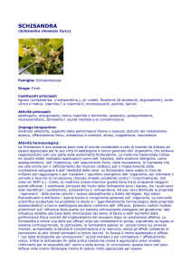 schisandra - Cibio Group