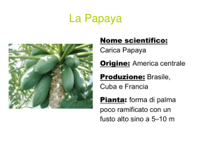 La Papaya - ipc Brunico