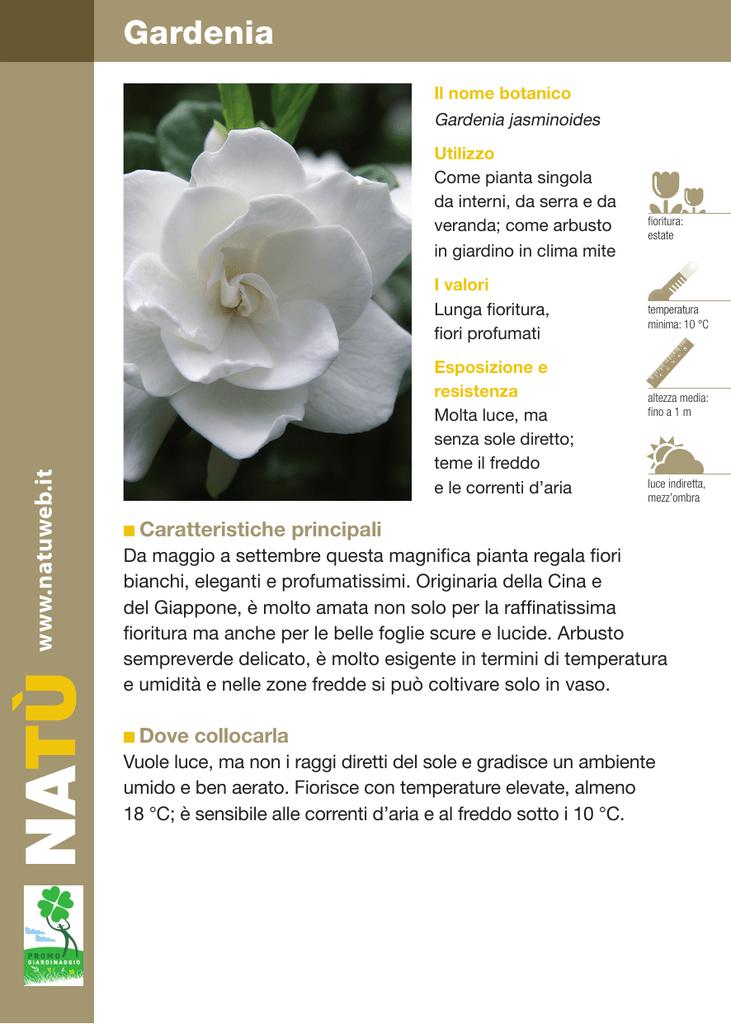 Fiori Bianchi Ombra.Gardenia Dichio Vivai Garden