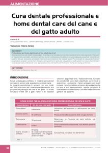 Cura dentale professionale e home dental care del cane e del gatto