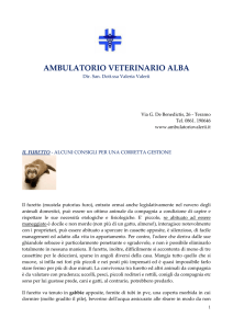Il Furetto - Ambulatorio veterinario Alba