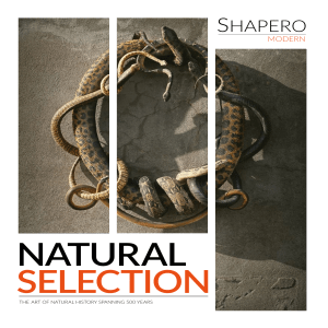 NaturalSelection 5