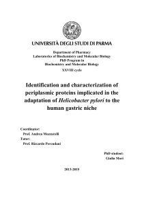 PhD thesis Giulia Mori